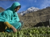 Haji Bibi, wife of Alam Jan Dario weeds garden, Chipurson Valley, tributary of Hunza Valley, Karakoram Range, Pakistan